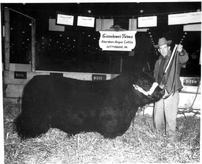 Bob Hartley with Angus bull at show, Chicago 1961. Note sign in background.